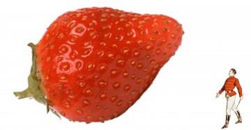 medium_dompteur-fraise.jpg