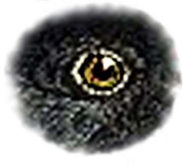 medium_oeil-72.3.jpg
