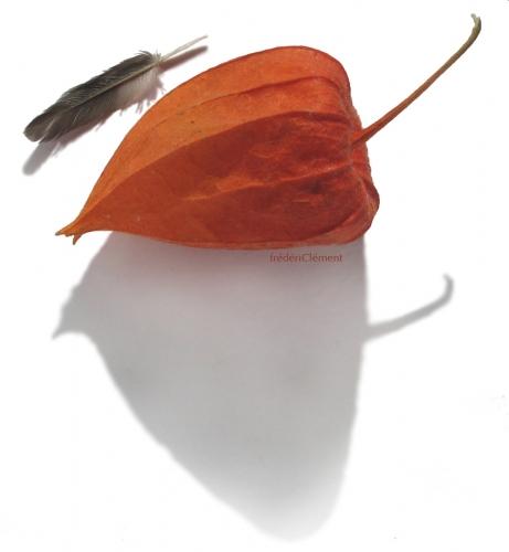 Basho-frederic-clement-7.jpg