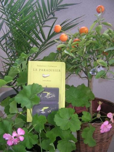 Paradisier-Brigit-orange.jpg