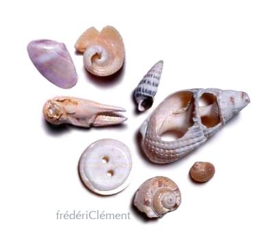 frederic-clement-Basho16.jpg