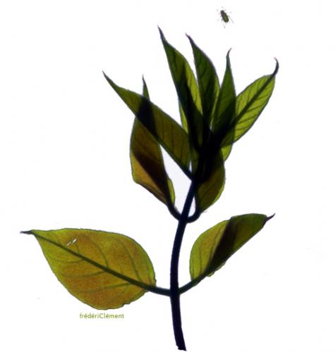 frederic-clement-Basho-13b.jpg