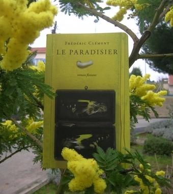 PARADISIER-brigitte-Mimosa.JPG